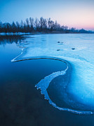 Blue  Photos - Swan by Davorin Mance