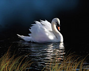 Graceful Digital Art - Swan Elegance by Robert Foster