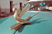 Cuba Prints - Swan flying Print by Nicole Neuefeind