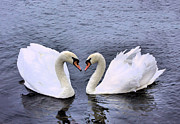 Swans... Photo Metal Prints - Swan Heart Metal Print by Kristin Elmquist