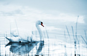 Monochromatic Digital Art Prints - Swan Print by Jaroslaw Grudzinski