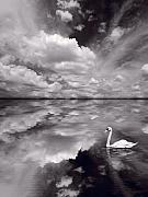Composite Prints - Swan Lake Explorations B W Print by Steve Gadomski