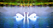 Swans... Digital Art Prints - Swan Love Print by Bill Cannon