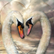 Lovers Mixed Media Framed Prints - Swan Love Framed Print by Carol Cavalaris