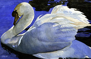 Waterfowl Paintings - Swan by Shari Nees