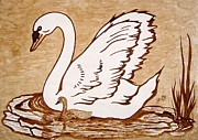Chick Painting Posters - Swan with chick original coffee painting Poster by Georgeta  Blanaru