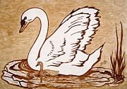 Swan With Chick Original Coffee Painting Print by Georgeta  Blanaru