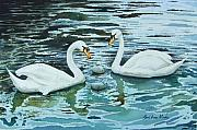 Swans And Cygnets Print by Paul Dene Marlor