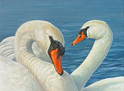 Swans... Paintings - Swans In Love by Lisa Bonforte