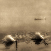 Black Swans Metal Prints - Swans Metal Print by Joana Kruse