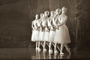 Ballet Dancers Photo Metal Prints - Swans Lined Up Metal Print by Kenneth Mucke