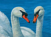 Swans... Paintings - Swans by Lisa Bonforte