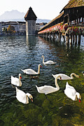 Potted Flowers Prints - Swans of the Chapel Bridge Print by George Oze
