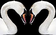 Kiss Mixed Media Metal Prints - Swans Metal Print by Svetlana Sewell