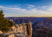 Scenic - Landscape - Swaying Tree over Grand Canyon by Darcy Michaelchuk