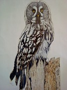 Swedish Uwl Print by Per-erik Sjogren