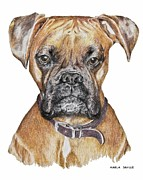 Dog Portraits Pastels Prints - Sweet Boxer Print by Marla Saville