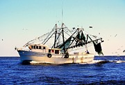 Shrimp Boats Posters - Sweet Carolina Poster by Karen Wiles