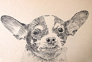 Robbi Musser Drawings Framed Prints - Sweet Chi Framed Print by Robbi  Musser