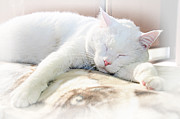 Cat - Sweet Dreams by Andee Photography
