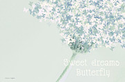 New Baby Posters - Sweet Dreams Butterfly Poster by Jayne Logan