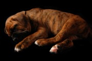 Sleeping Dog Prints - Sweet Dreams Puppy Print by Angie McKenzie