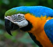 Macaw Photos - Sweet Expression by Karon Melillo DeVega