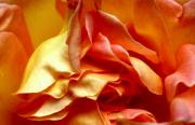Peach And White Prints - Sweet Folds Print by Louie Rochon