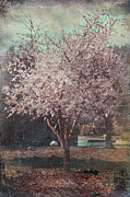 Cherry Blossoms Digital Art Metal Prints - Sweet Kisses Under the Tree Metal Print by Laurie Search