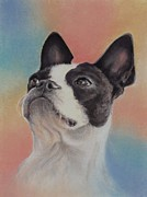 Terriers Pastels Framed Prints - Sweet Little Boston Terrier Framed Print by Pamela Humbargar