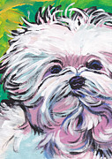 Maltese Dog Posters - Sweet Maltese  Poster by Lea