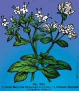 Digital Collage Prints - Sweet Marjoram Print by Eric Edelman