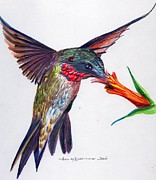 Colored Pencil Mixed Media Metal Prints - Sweet Nectar Metal Print by Mindy Newman