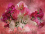 Framed Print Mixed Media Posters - Sweet Peas Poster by Carol Cavalaris