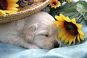 Kelly S Andrews - Sweet Puppy Dreams