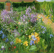 Garden Path Posters - Sweet Rocket - Foxgloves and Irises Poster by Timothy Easton