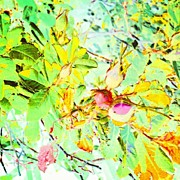 Impressionism Art - Sweet Rose Buds #android #andrography by Marianne Dow
