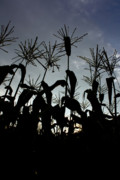 Sweet Corn Farm Prints - Sweet Silhouette  Print by Tim  Fitzwater