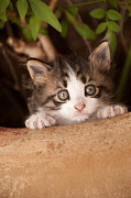 Kitten Prints Prints - Sweet small cat Print by Manolis Tsantakis