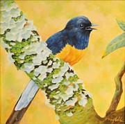 Carol Reynolds - Sweet Song - Shama Thrush