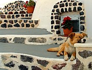 Josephine Johnston - Sweet Stray in Santorini