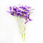 Soft Focus Art - Sweet Violets by Linde Townsend