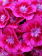 Decorative Art Art - Sweet William by Leon Zernitsky