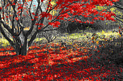 Red Leaves Photos - Sweetest goodbye by Trish Hale