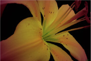 Warm Looking Flower Prints - Sweetness Glow Print by Debra     Vatalaro