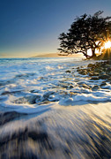 Sunset Tree Framed Prints - Swept out to Sea Framed Print by Mike  Dawson