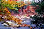 White Mountains New Hampshire Posters - Swift River Autumn Scenic Poster by George Oze