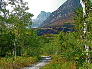 Montana Digital Art - Swiftcurrent Pass Trail in Glacier NP by Ruth Hager