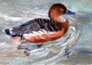 Waterfowl Paintings - Swimming aceo by Brenda Thour