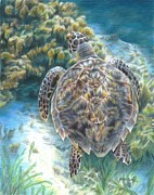 Ocean Turtle Painting Originals - Swimming Turtle by Carla Kurt